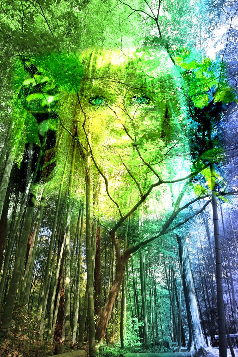 Cokata Gesichtlesen, Waldcoaching, Workshops